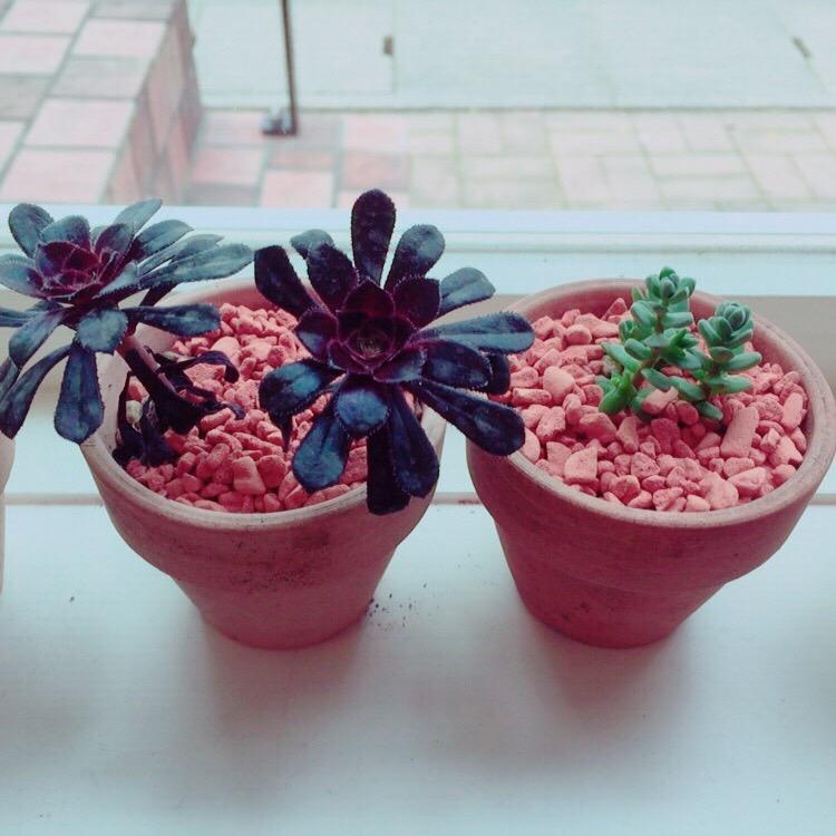 甲斐市amuleto(アムレット)植物日記♡